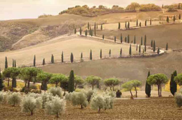 Tuscan countryside road- Tuscan Weddings and Events
